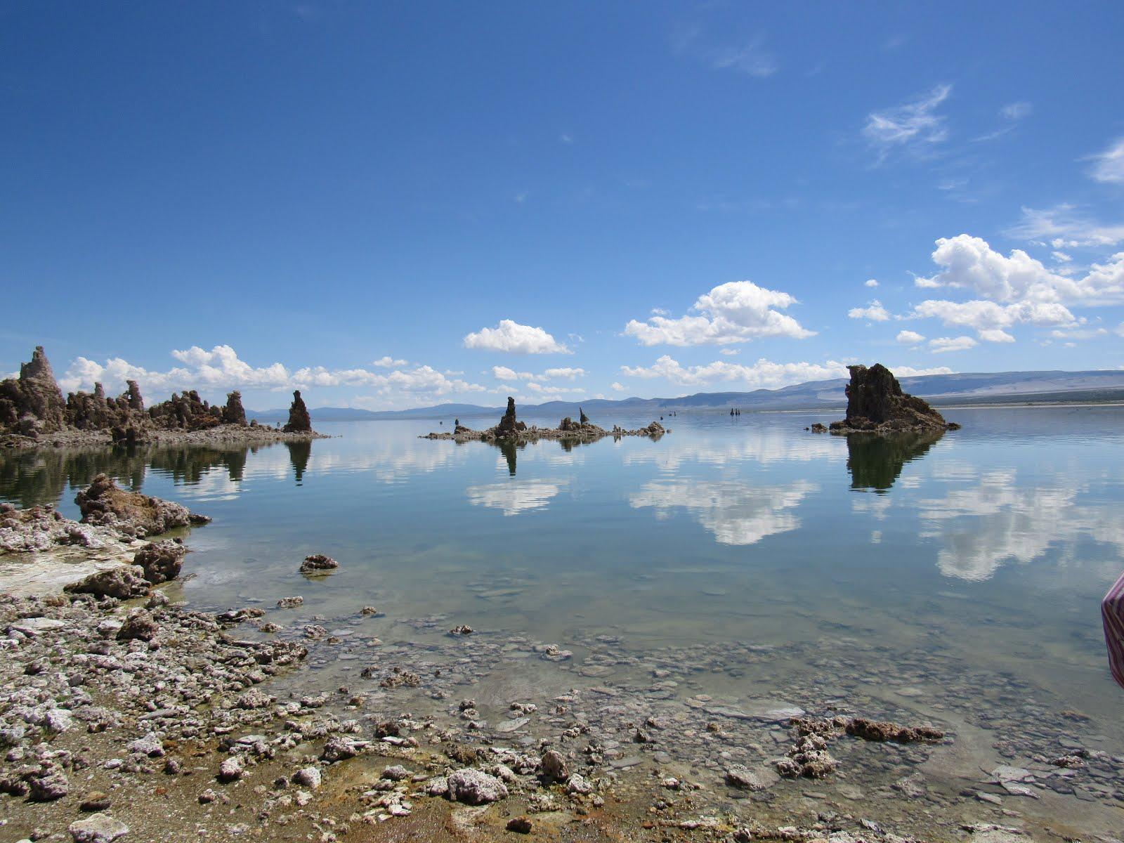 Brine Shrimp of Mono Lake