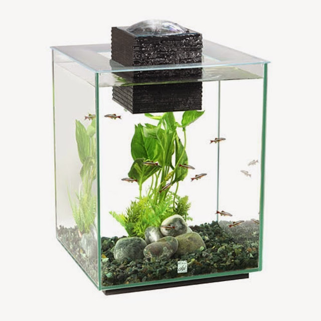 Shelly 39 s super spiffy stuff modern contemporary fish for Modern fish tanks