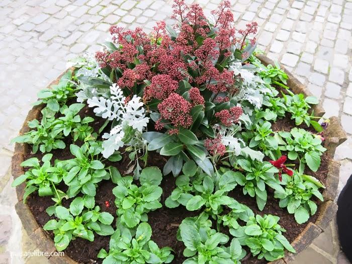 Composiciones De Plantas Para Jardineras En Invierno
