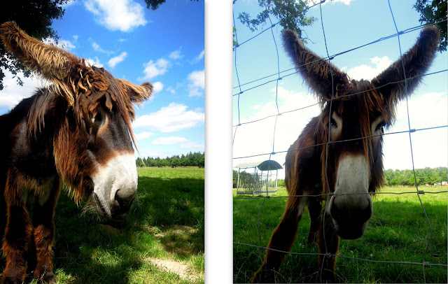 rare donkey