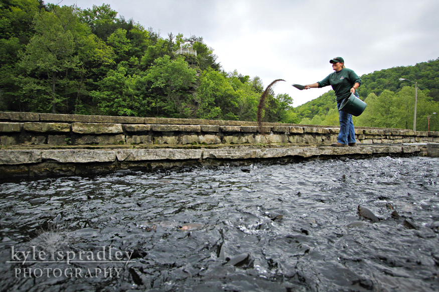 Kyle spradley photography blog may 2012 for Roaring river fish hatchery