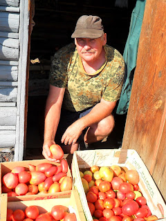 Vkusniogorod - Начало августа на даче – помидоры 2