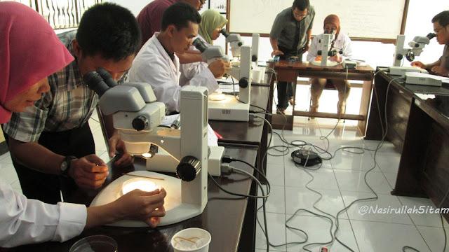 Identifikasi genus nyamuk di lab