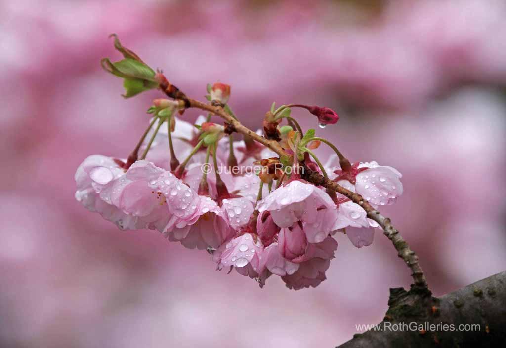 http://juergen-roth.artistwebsites.com/art/all/all/all/flowers