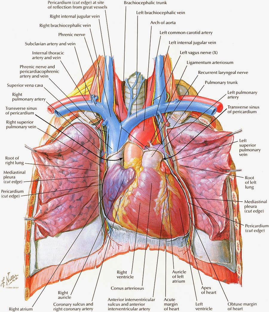 Dibujo, Anatomía e Historia