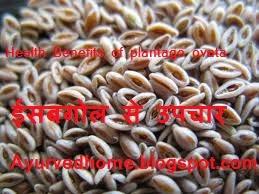 isabghol seeds