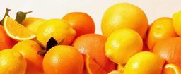Garganistan Gargano Agrumi del Gargano Limone Femminello. Limone lustrino, Limone sanguigno, Limone dolce, Arancia bionda comune, Arance a pera, Arancia duretta, Arancia Incannellata, Arancia mordesca