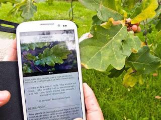 Arbolapp es un aplicación gratuita basada en la investigación del Real Jardín Botánico del CSIC que te ayudará a identificar los árboles silvestres de la Península Ibérica y las Islas Baleares. ¡Descárgatela y disfruta de la naturaleza y de la ciencia!