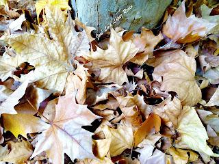 hojas caídas, Otoño, amor, árbol caduco, amor caduco