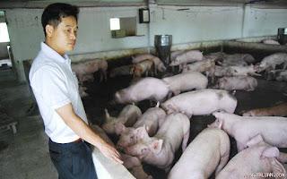 Các hộ chăn nuôi nhỏ lẻ là đối tượng chịu tác động đầu tiên khi Việt Nam gia nhập TPP.