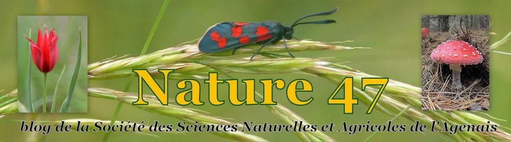 Nature 47