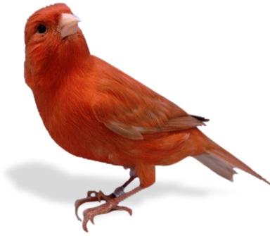 jenis-macam-gambar burung