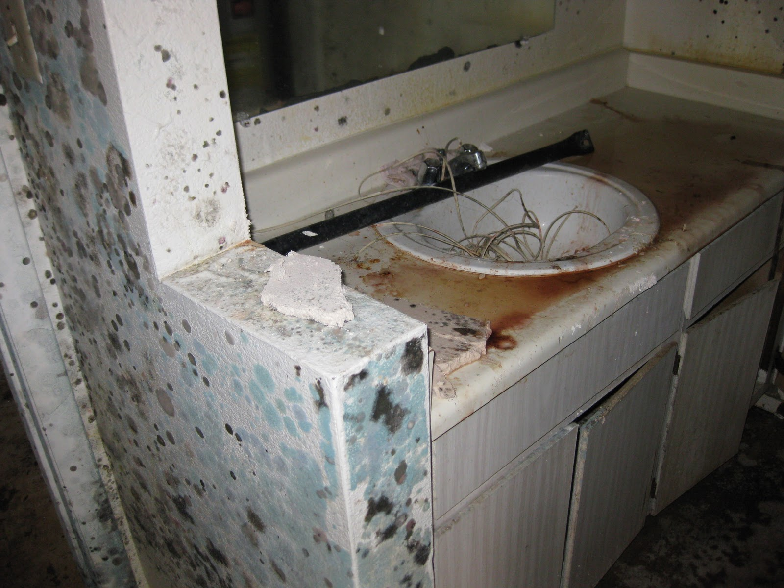 Will Insurance Cover Mold Removal In Home