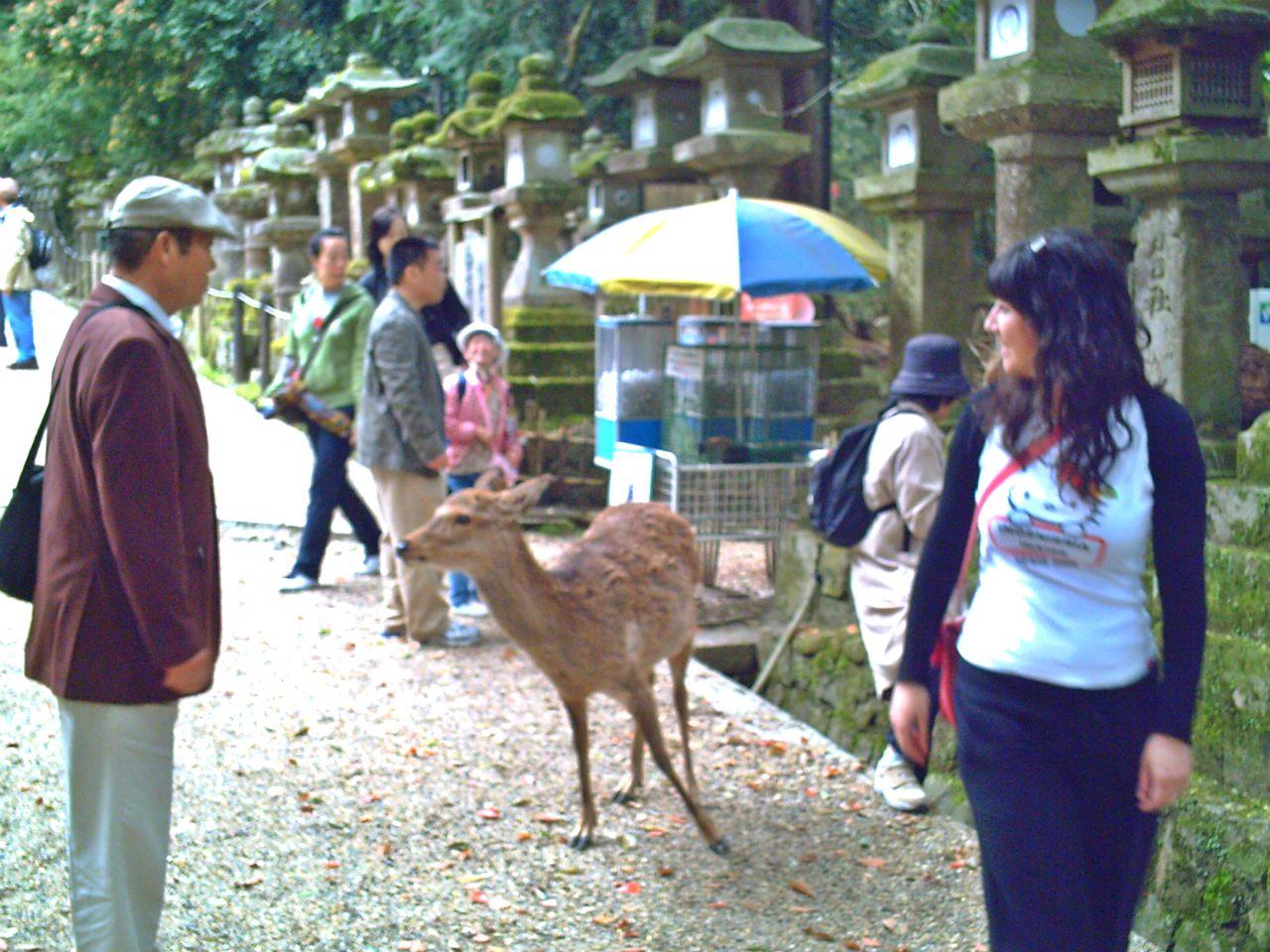 Parque de los ciervos Nara Japon