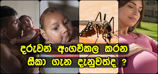 zika-virus-expected-to-spread-sri-lanka