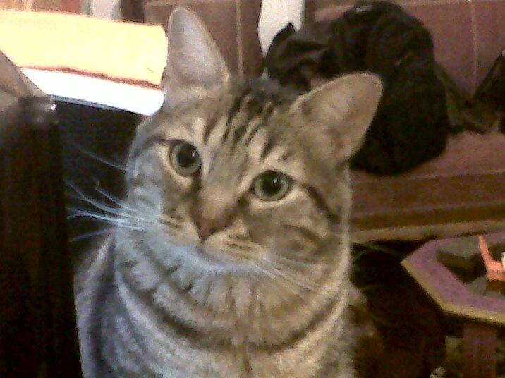 Tres acepciones de la palabra gato