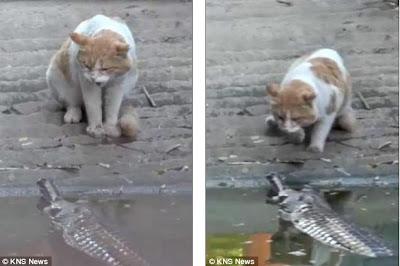 Kucing Pemberani dari India