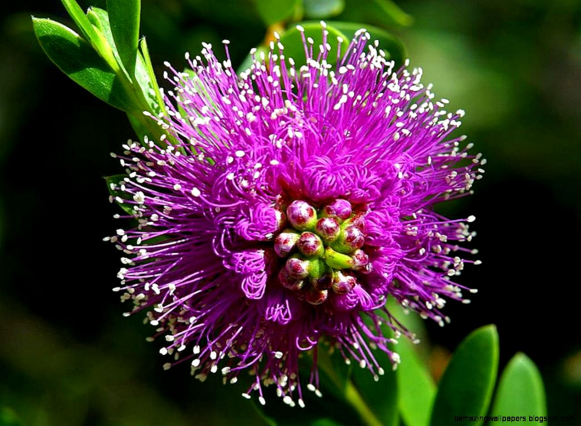 Most Beautiful Purple Flowers Amazing Wallpapers