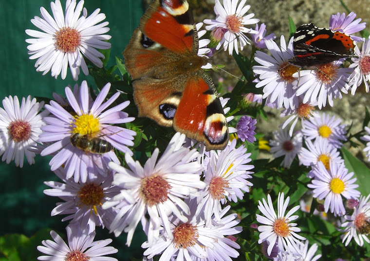 Le jardin du printemps à l'automne