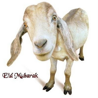 Eid Qurbani bakra