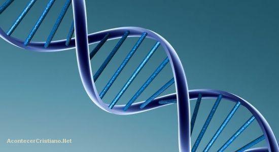 Científicos descubren gen relacionado con el liderazgo