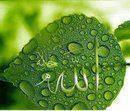 http://ilwansupriyadi.blogspot.com/2014/01/renungan-tentang-kekuasaan-allah-swt.html