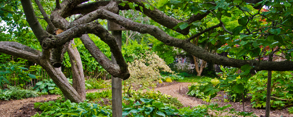 Wisconsin explorer things to do in madison wi for Olbrich botanical gardens hours