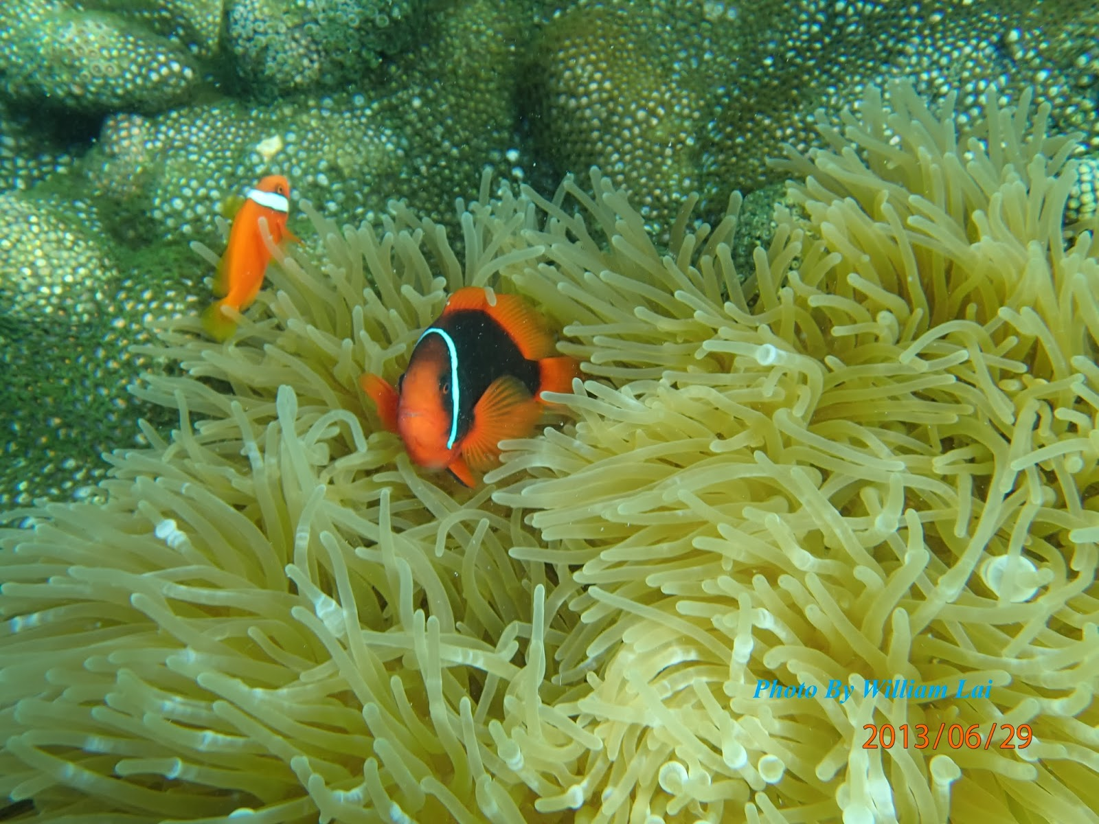 William Island Paradise Ent Beautiful Coral Amp Fish