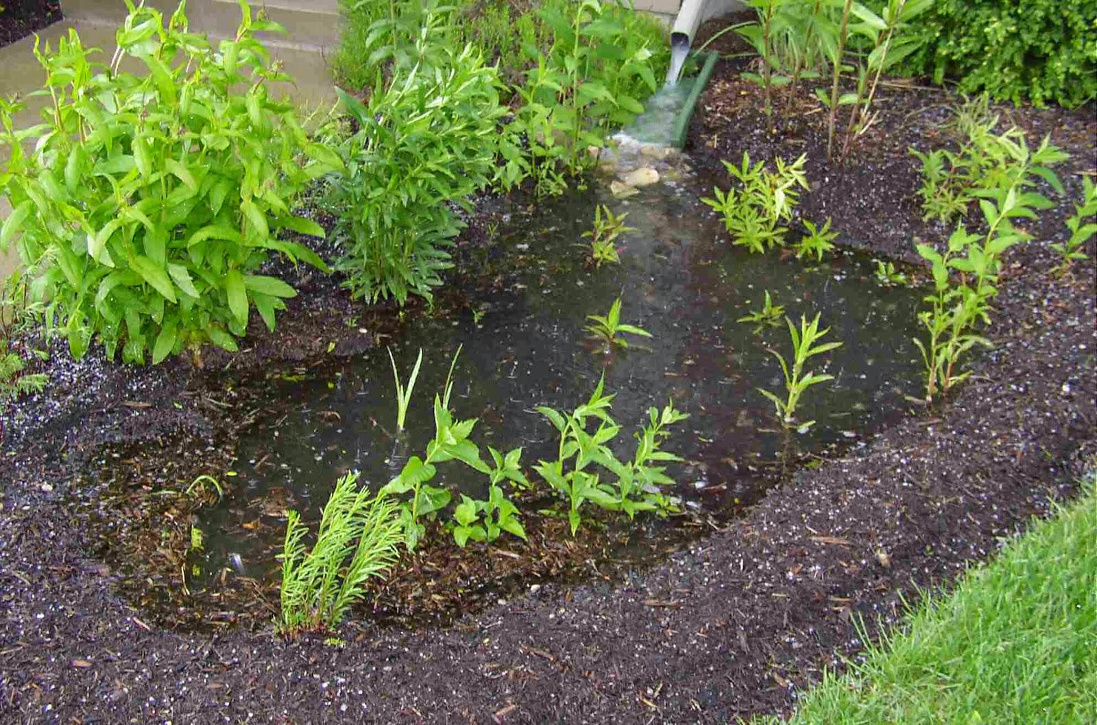 al incluir plantas nativas en tu jardn invitaras mariposas pjaros e insectos que pueden ayudar a controlar la cantidad de