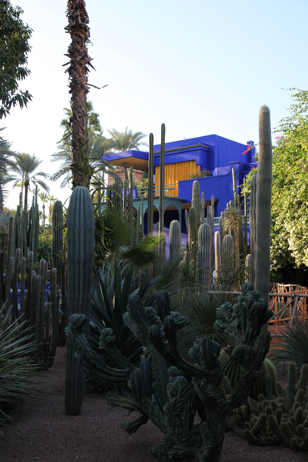 Habitually chic chic in morocco jardin majorelle for Jardin marrakech