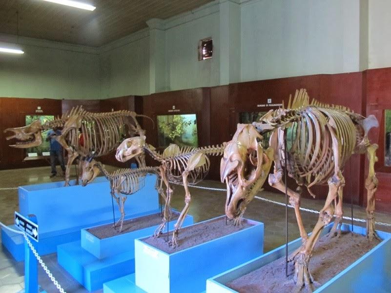 Kebun Raya Bogor, Taman Botanikal Tertua Di Asia