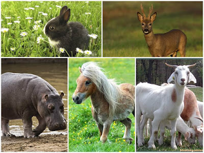 gambar binatang herbivora