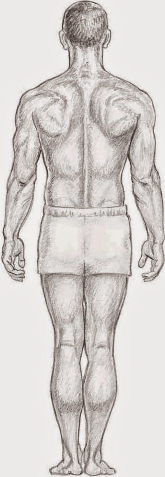 Drawings: UNDERSTANDING BODY ANATOMY