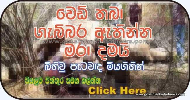 http://www.gossiplanka-hotnews.com/2014/08/pregnant-elephant-killed-in-hambantota.html