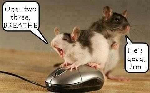 mouse doing CPR on mouse