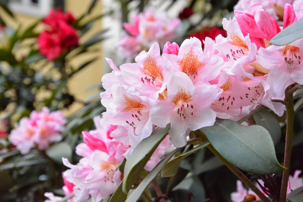 Blumen Foto, Frankfurt am Main