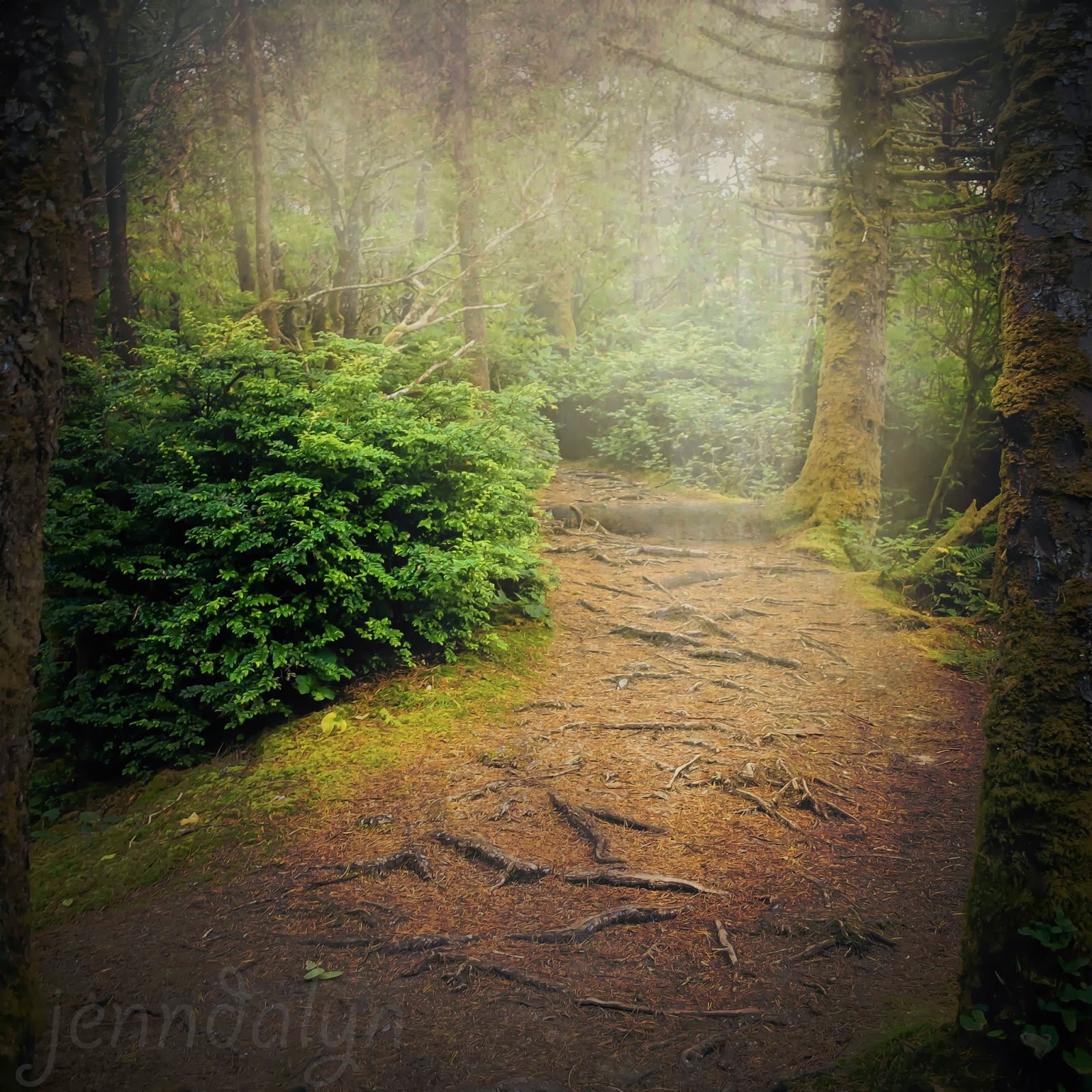 how to create an enchanted forest
