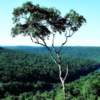 Árvore, em primeiro plano. Rio Uruguai corta em meio à vegetação nativa.