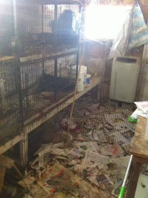 puppy mills breeding gone wrong puppy mills backyard