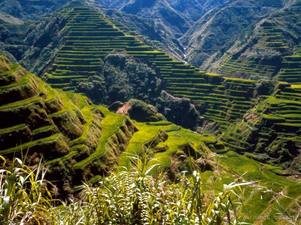 Banaue Rice Terraes