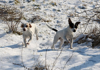 They have started to love the snow