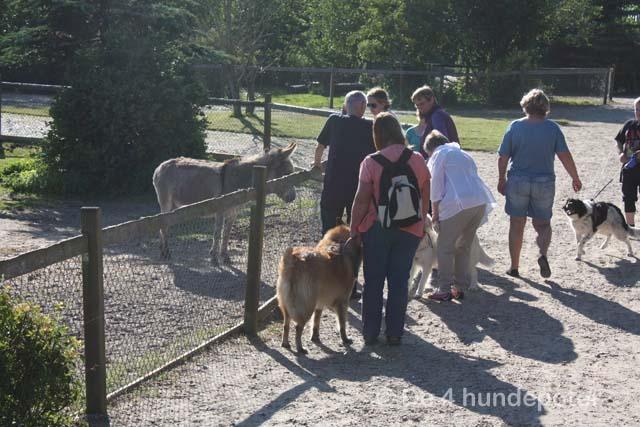 Lintrup zoo med piger Oksbøl