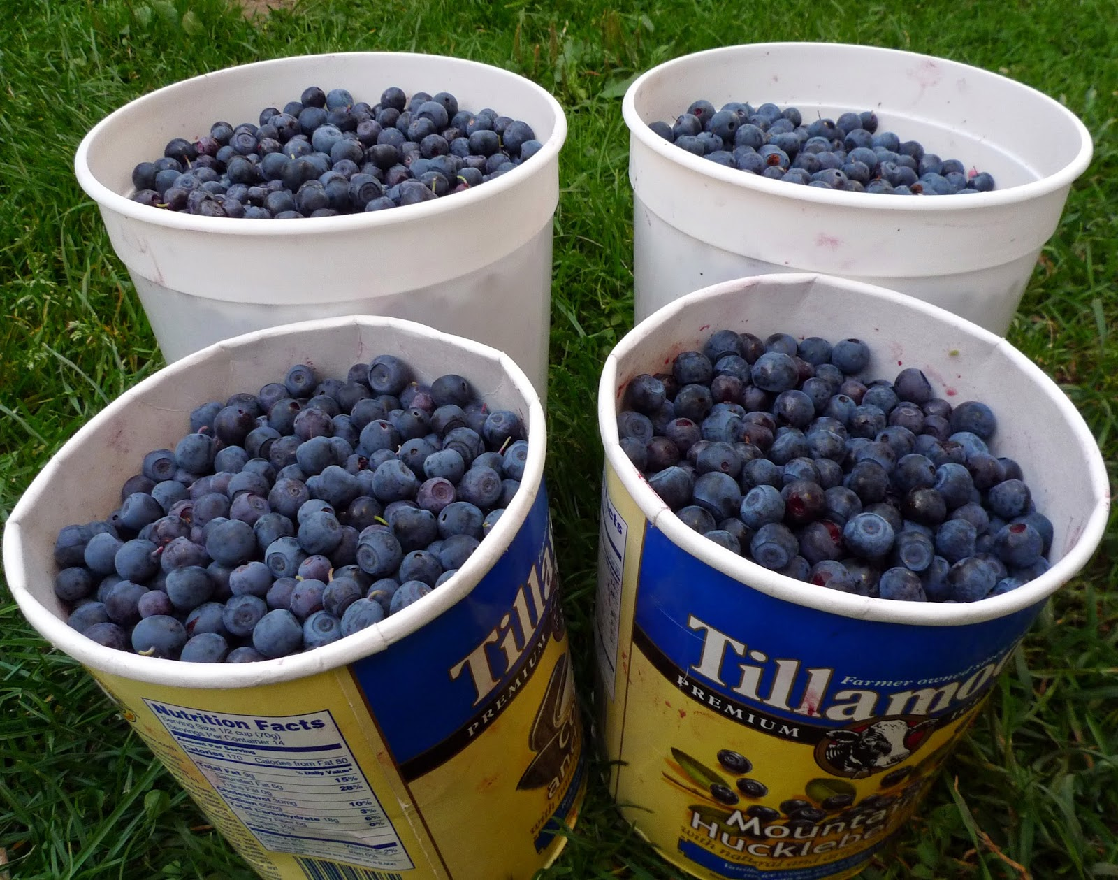Berry Picking For Food Bank Alberta