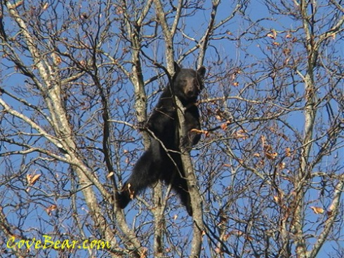 all species fitness bear with me up the cliff