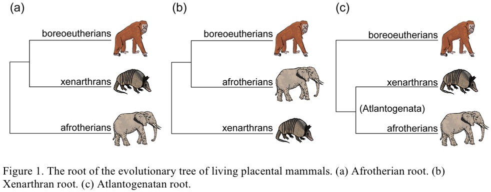 The Genealogical World Of Phylogenetic Networks Conflicting
