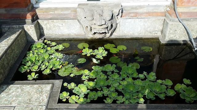 Estanque de lotos en Bali