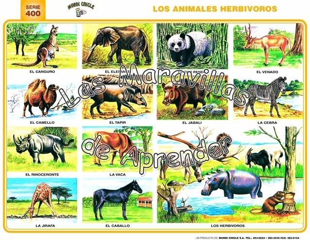 Laminas De Animales Carnivoros Herbivoros Y