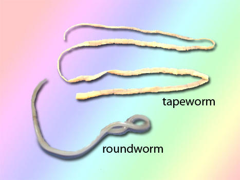Cat Has Roundworms