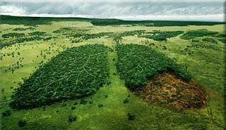 Dia del Medio Ambiente, parte 4