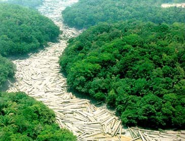 Amazônia Viva